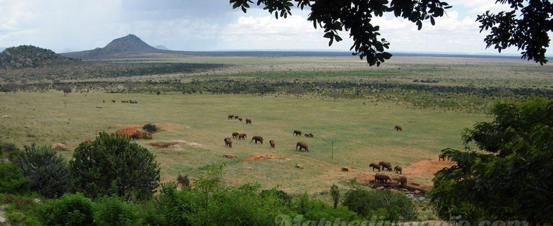 Viaggio e Safari in Kenya (parte 2×4): Mombasa, Nairobi e i primi Safari