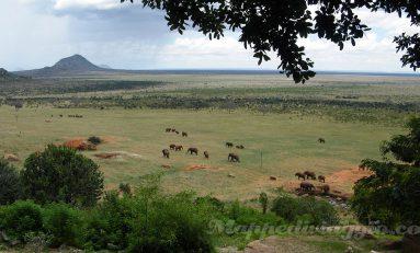 Viaggio e Safari in Kenya (parte 2x4): Mombasa, Nairobi e i primi Safari