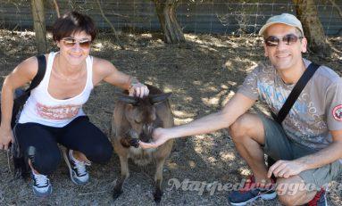 Australia parte 3: tour a Kangaroo Island (secondo giorno) e ritorno ad Adelaide