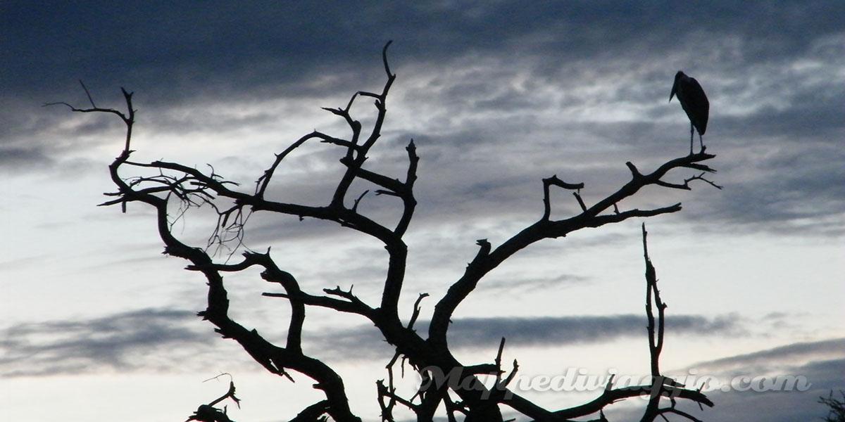 avvoltoi-della-savana