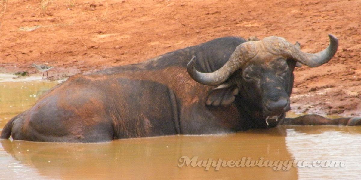 bufali-nel-parco-tsavo