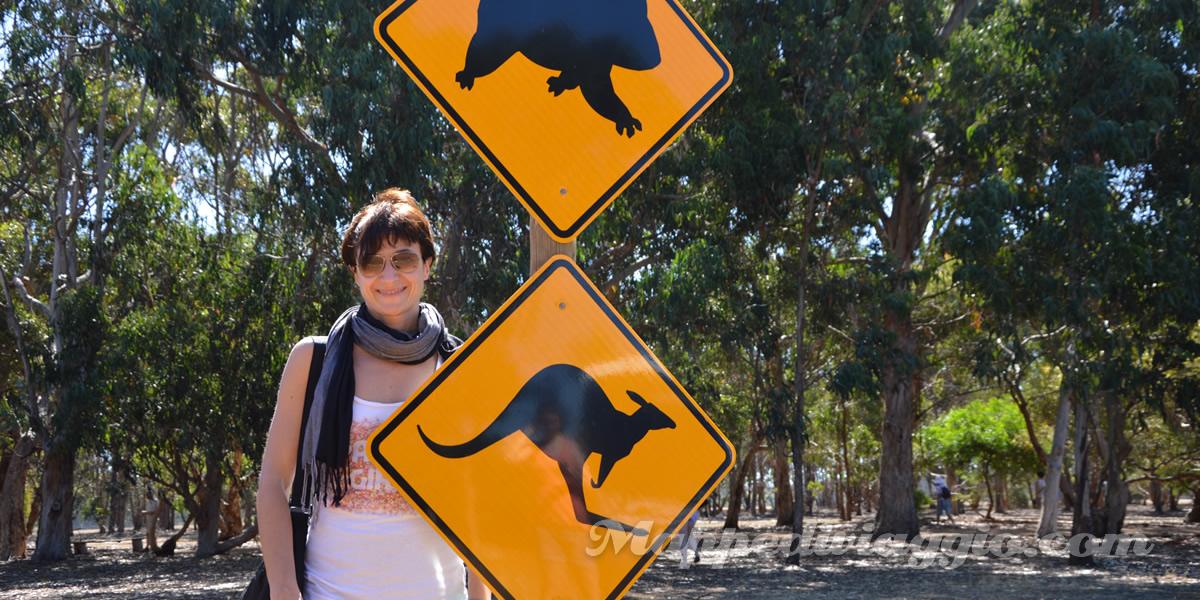 cartelli-koala-canguri-selvaggi