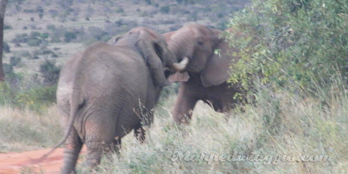 elefanti-africani-safari-kenya