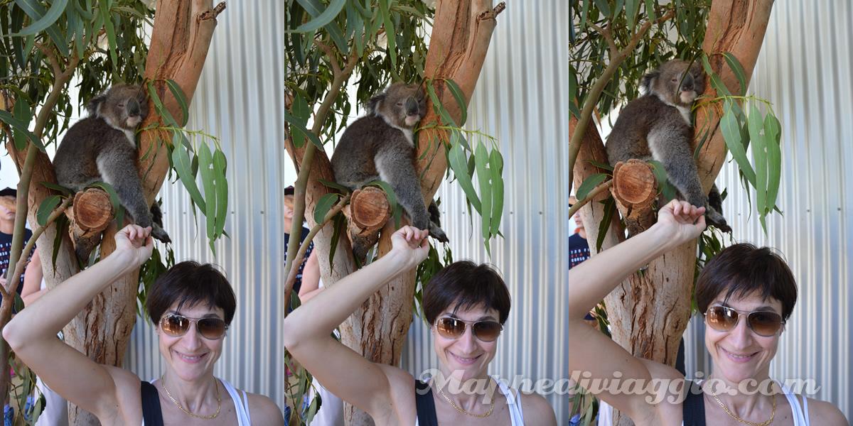 foto-koala-senza-rischi