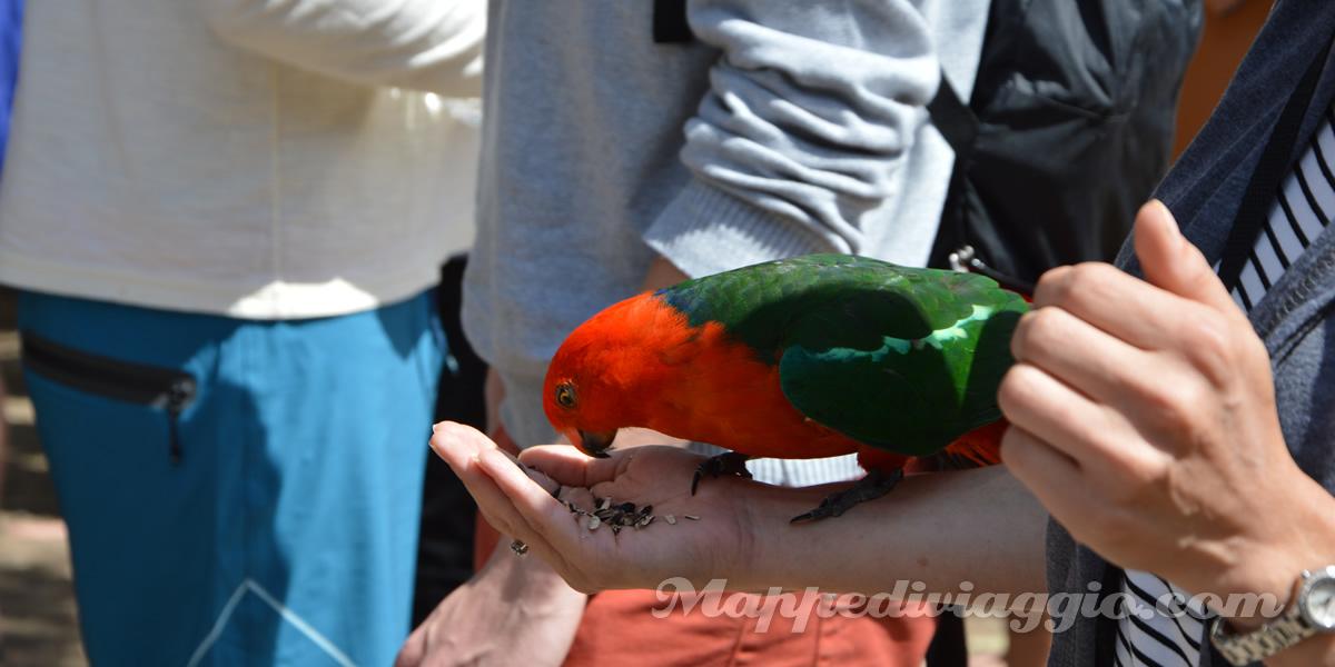 foto-pappagalli-liberi-dodici-apostoli