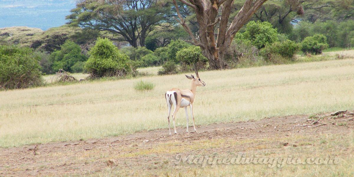 foto-safari-amboseli