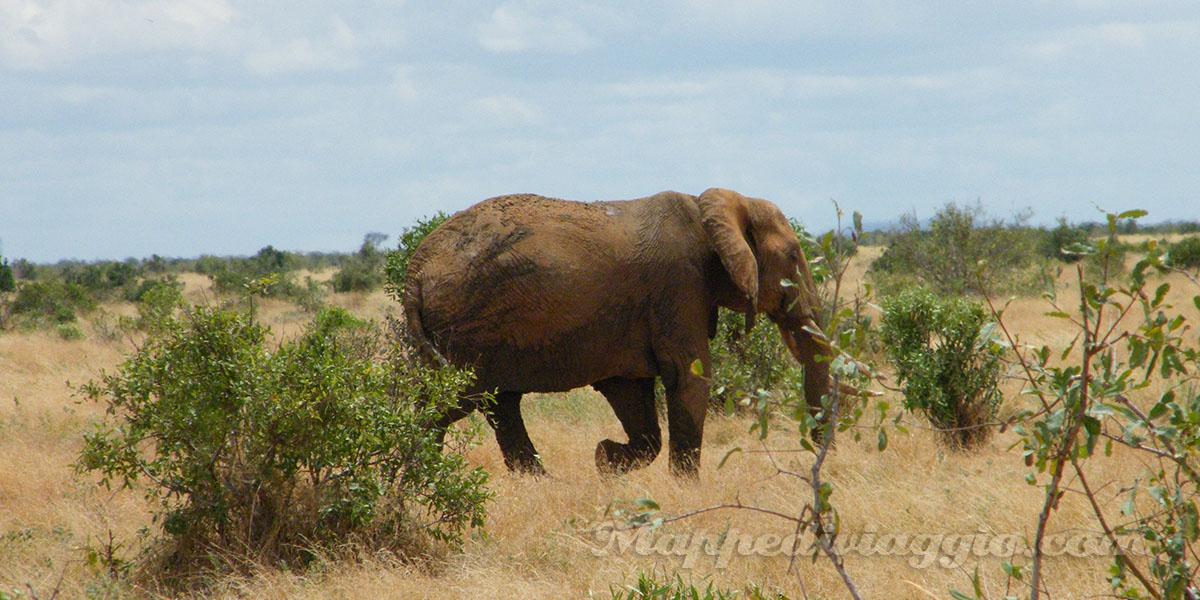foto-safari-kenya-elefanti