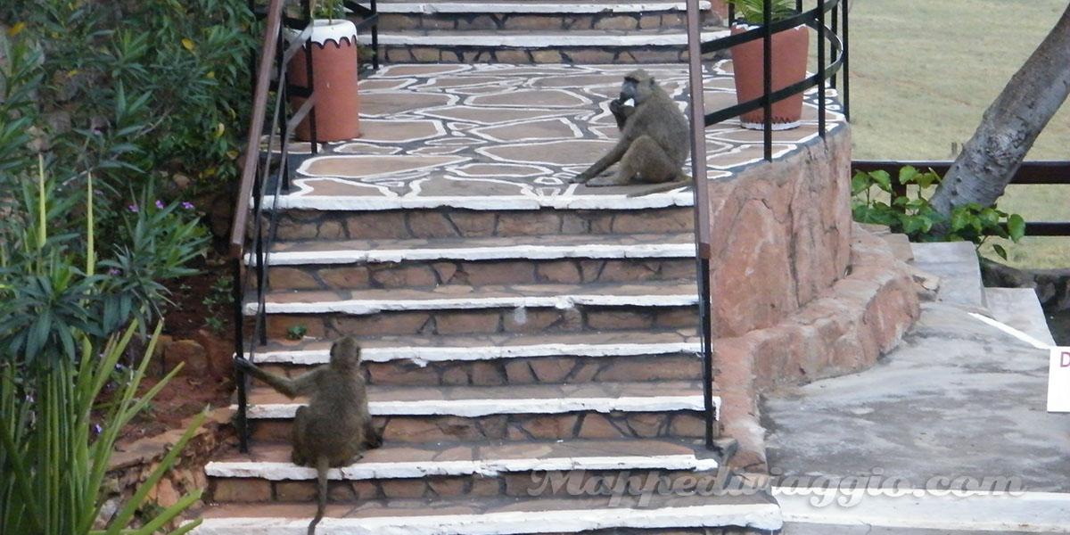 foto-scimmie-hotel-safari-kenya