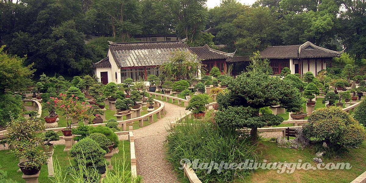 giardino-bonsai