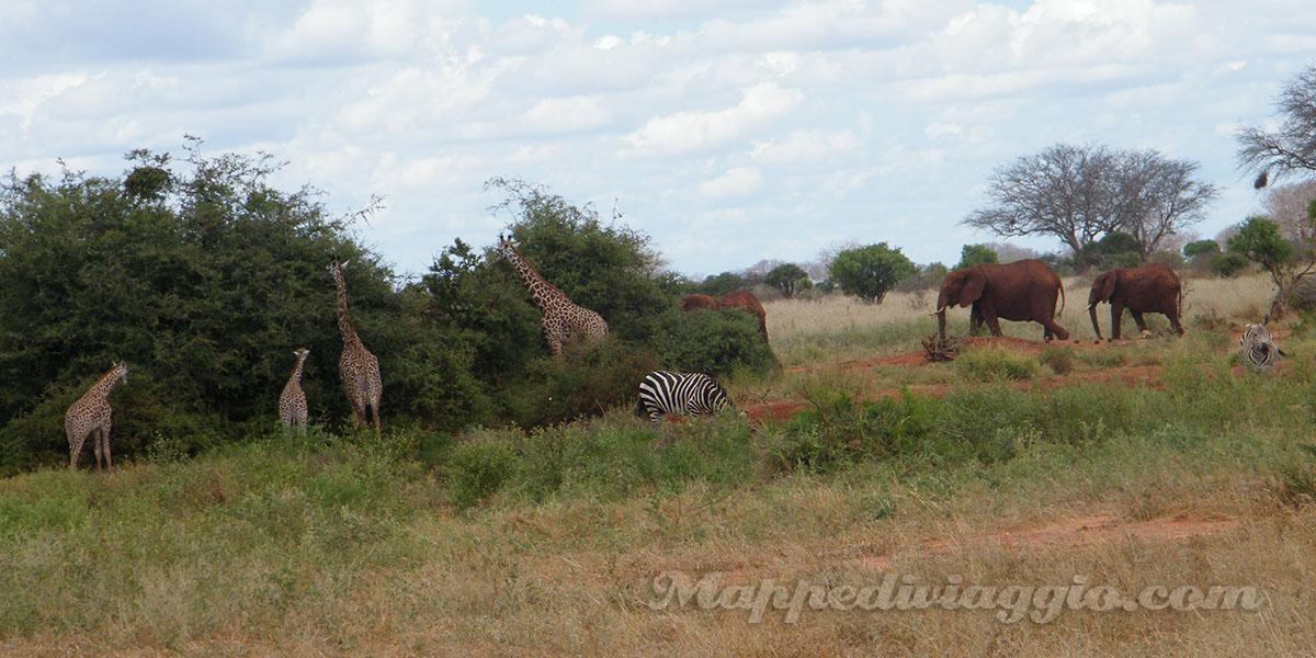 giraffe-elefanti-zebre-kenya