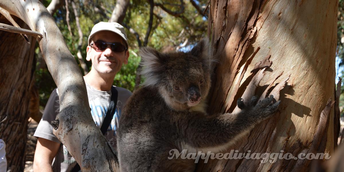 kangaroo-island-hanson-bay-sanctuary-cammino-dei-koala