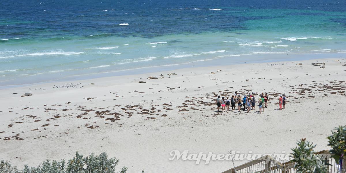 kangaroo-island-seal-bay-leoni-marini