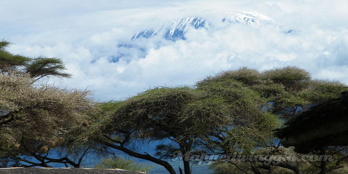 kilimangiaro-safari-savana