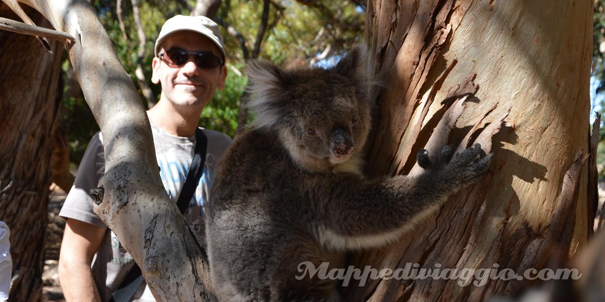 koala-incontro-ravvicinato-hanson-bay