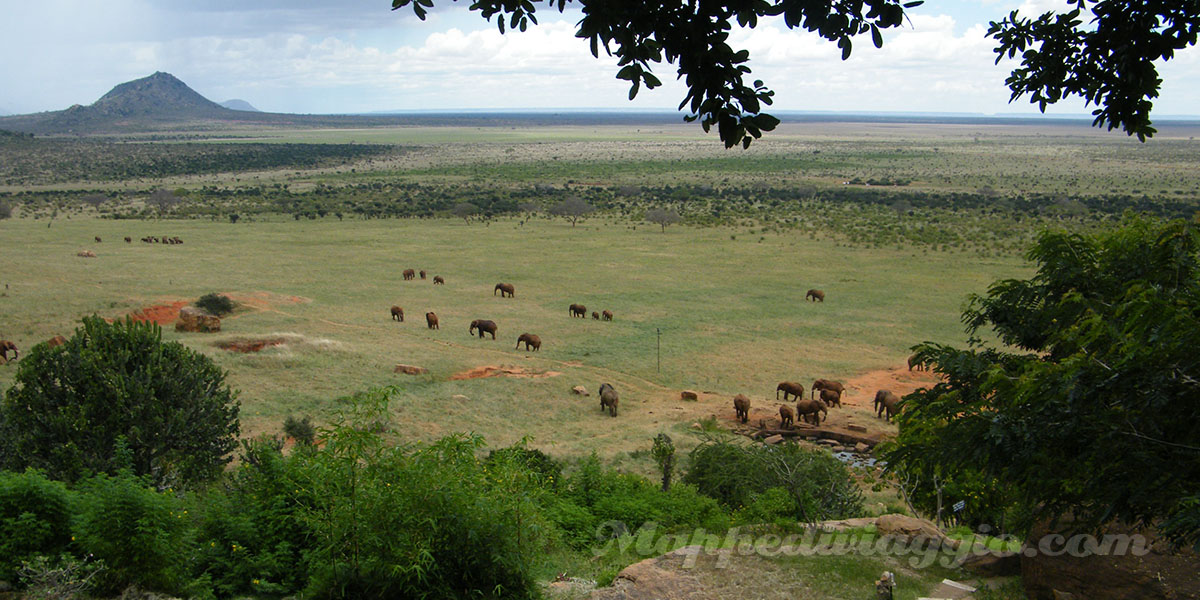 panorama-safari-kenya