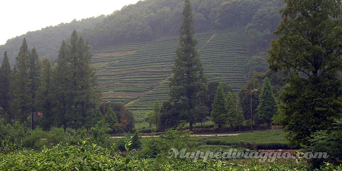 piantagioni-the-verde
