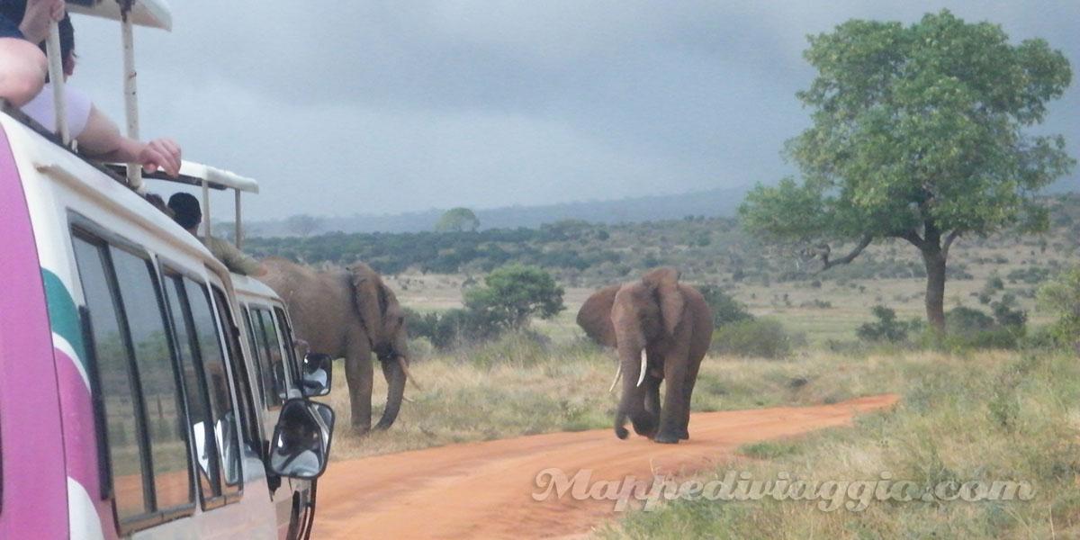 safari-africa-kenya