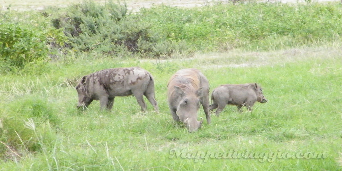 safari-parco-amboseli