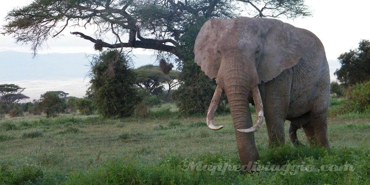 safari-savana