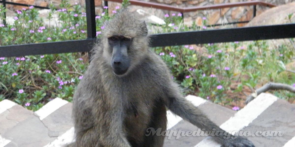scimmie-hotel-kenya