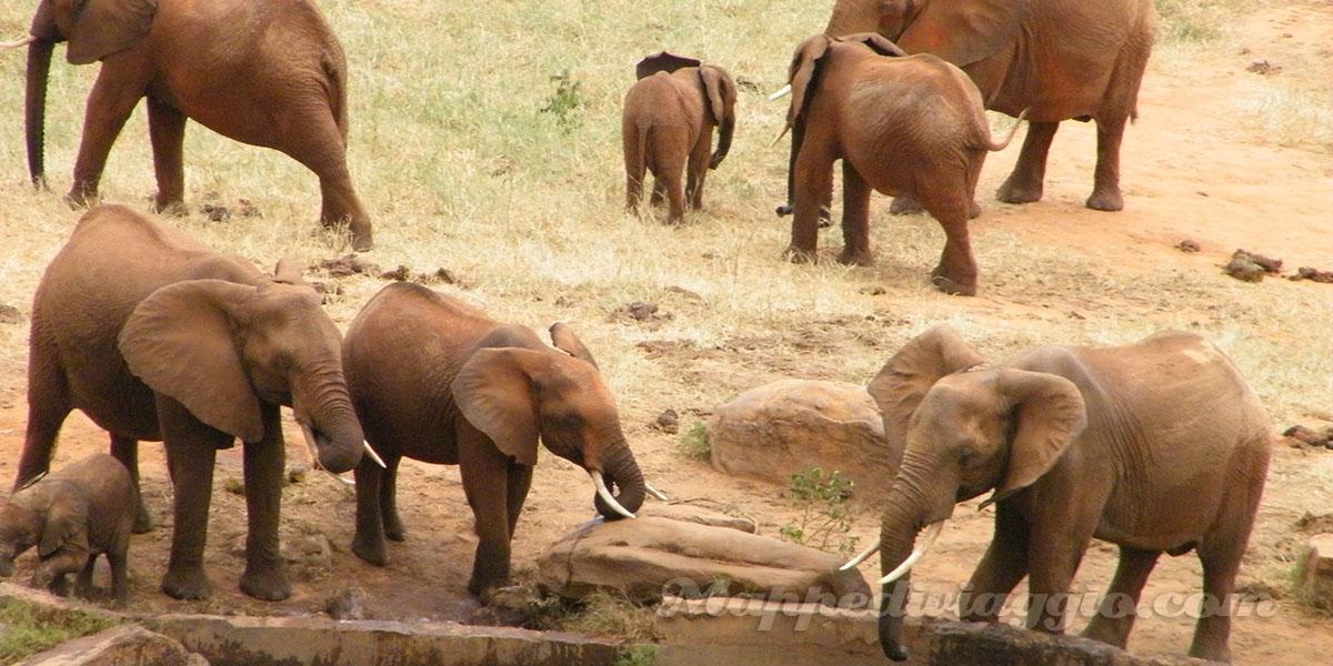 tour-foto-elefanti-kenya