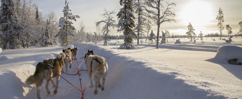 Tour di gruppo in Lapponia e Rovaniemi (4 giorni, novembre 2018)